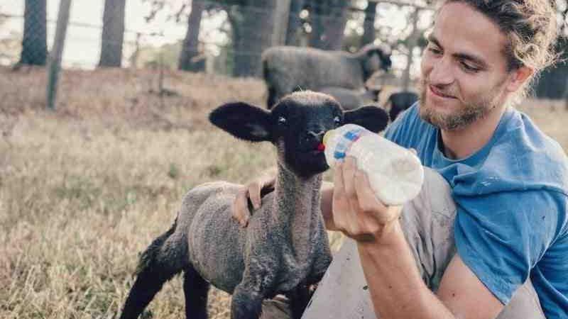 Comment trouver du travail dans les fermes en Australie ?