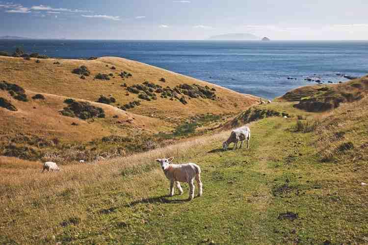 Comment vivre en Nouvelle-Zélande?