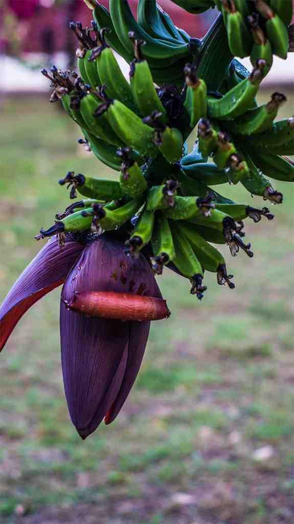 La vie est-elle chère en Guadeloupe?
