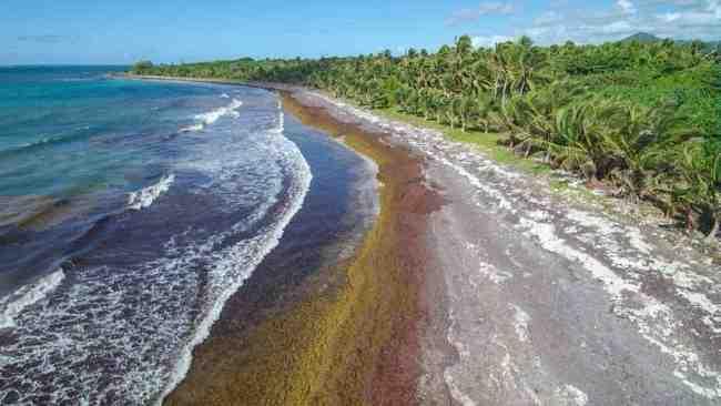 Où sont les Sargasses en Martinique?