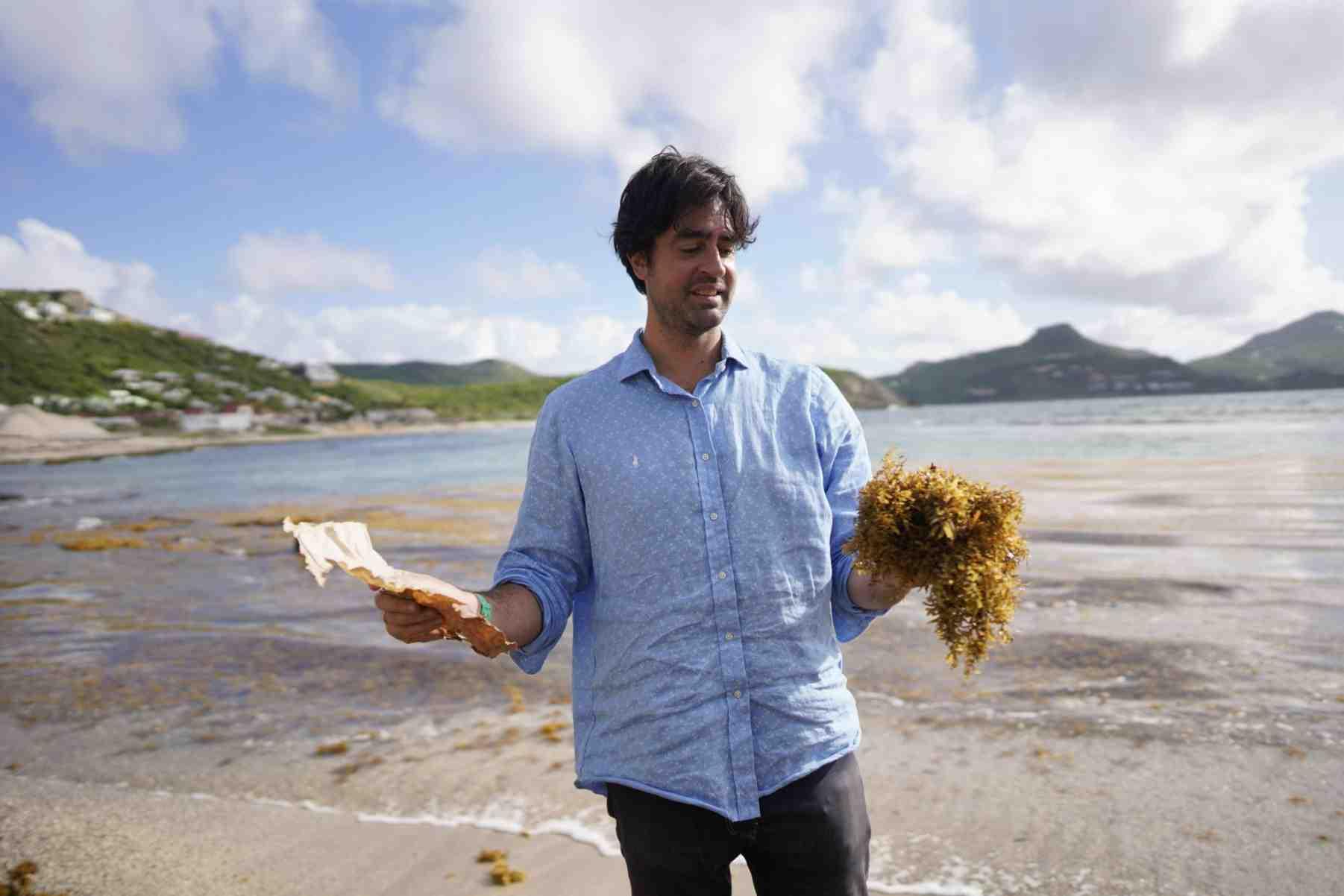 Où sont les algues Sargasses?
