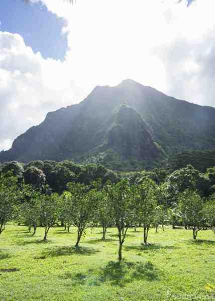Quel est le meilleur mois pour visiter la Polynésie?