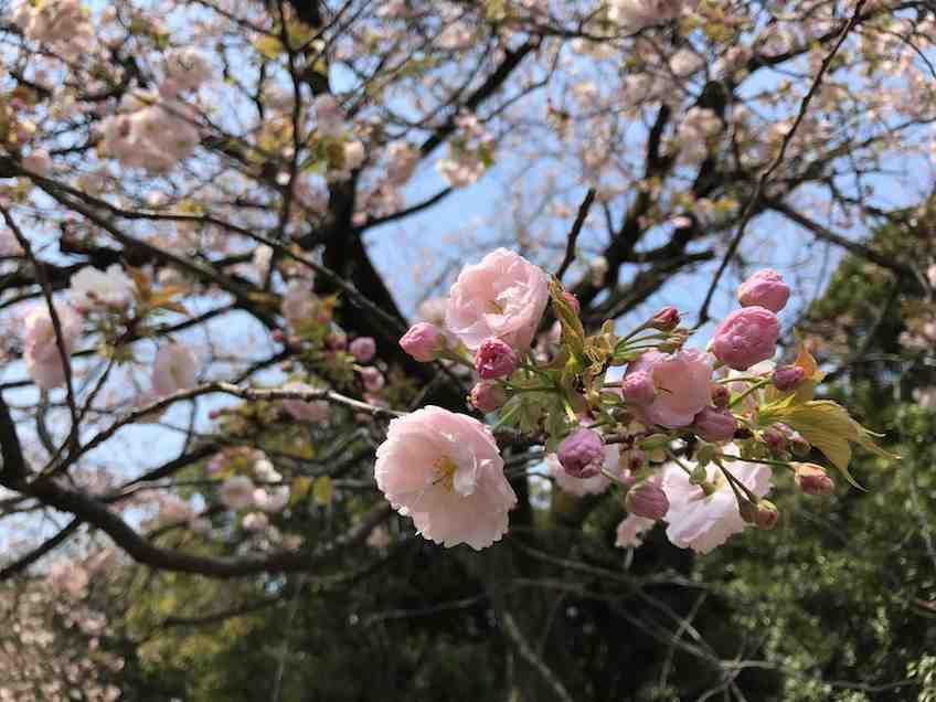 Quelle est la meilleure période pour visiter le Japon?