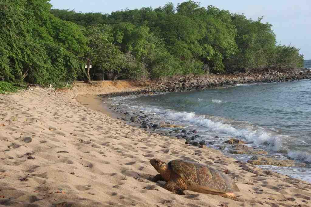 Qu'est-ce qui est dangereux en Guadeloupe?